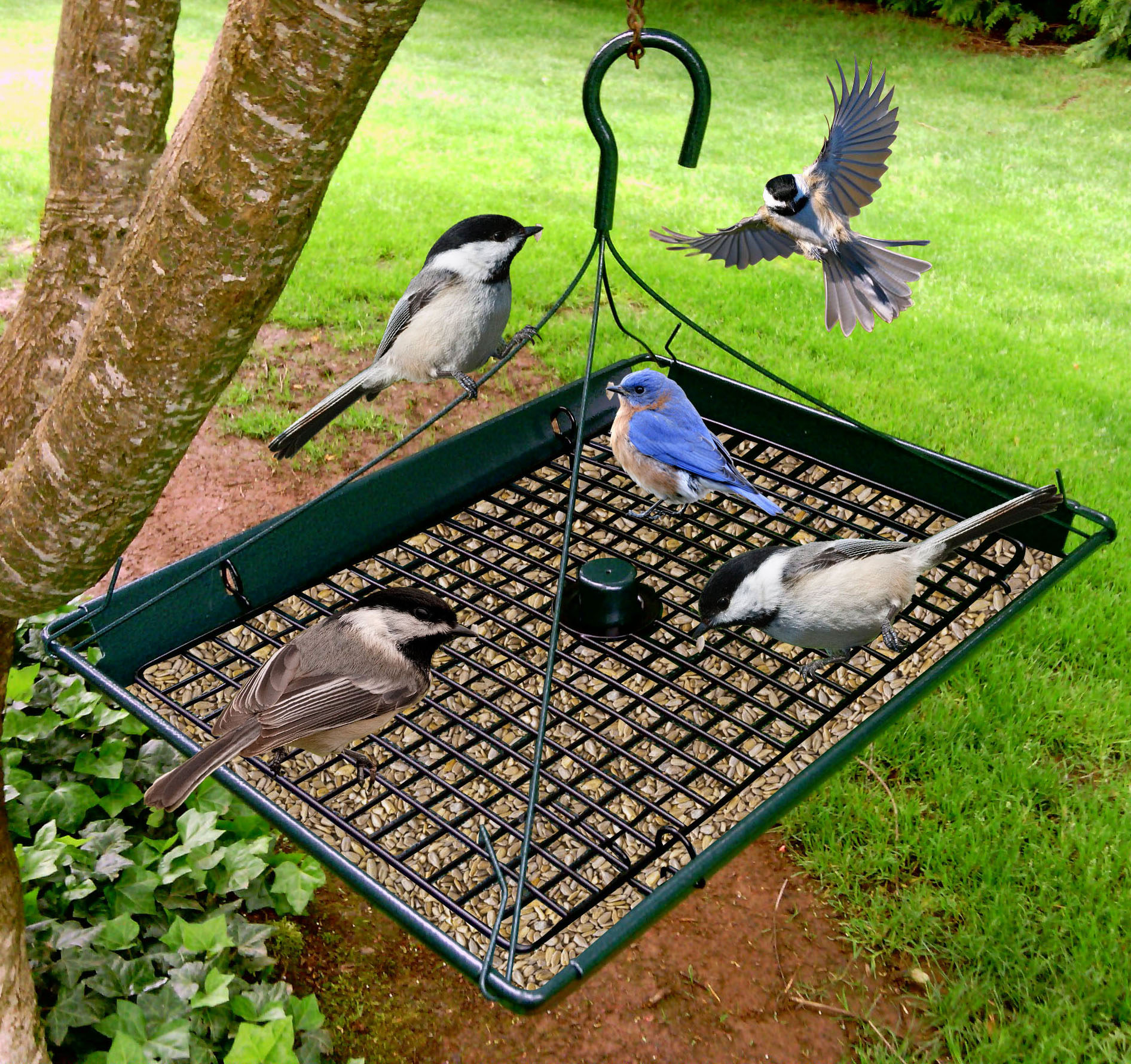 Zenport Bird Feeder Z203009 3-in-1 Platform Bird Seed Feeder