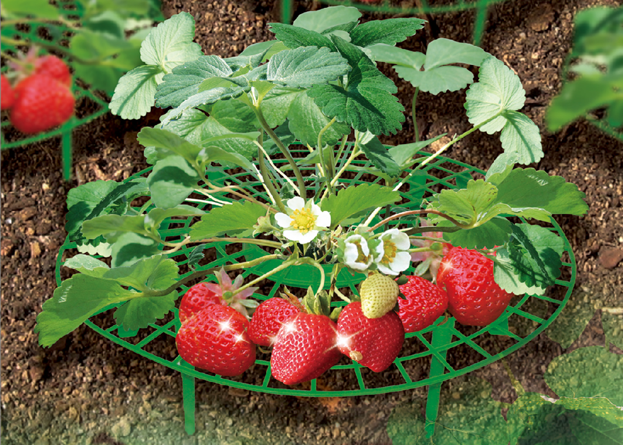 Zenport Garden Supports P-309 Fruit and Vegetable Supports