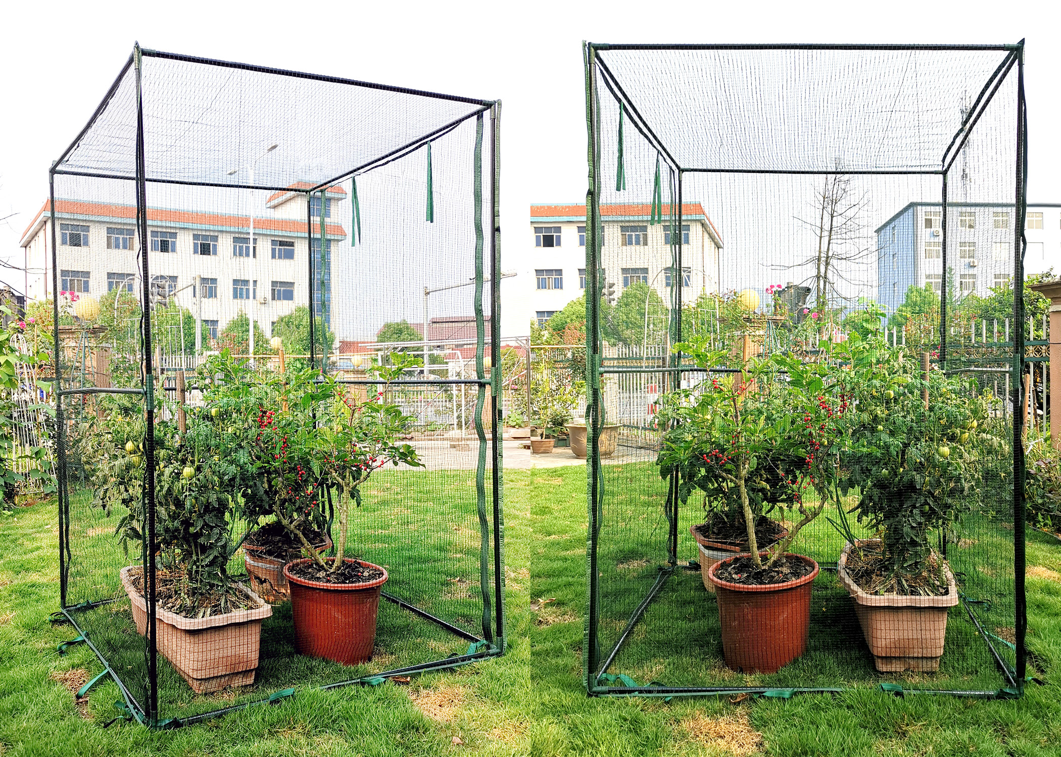 Fruit Cage SH3288 Steel Frame, Anti-Bird Netting, 47.2 x 47.2 x 70.9-inches
