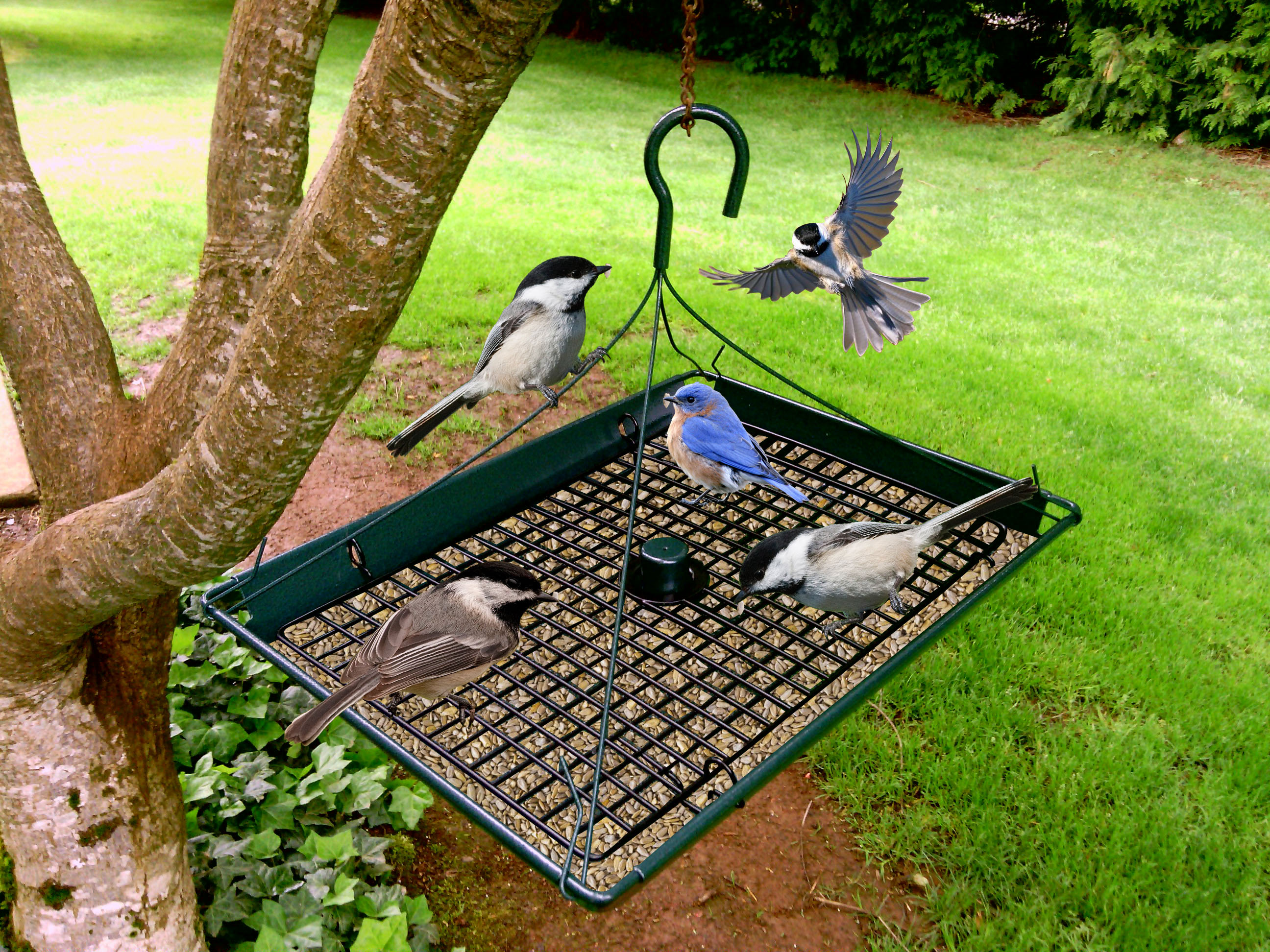 Bird and Squirrel Feeders